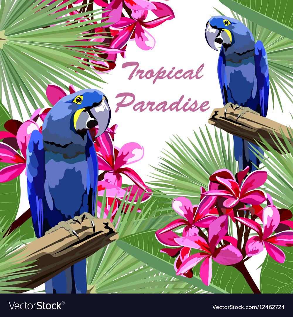 Exotic tropical card with parrot birds vector