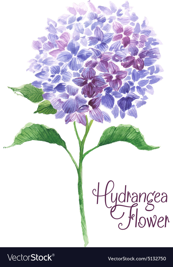 Branch of blue hydrangea vector