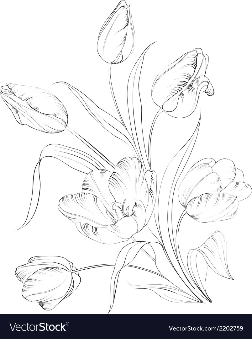 Printhand drawn tulips vector