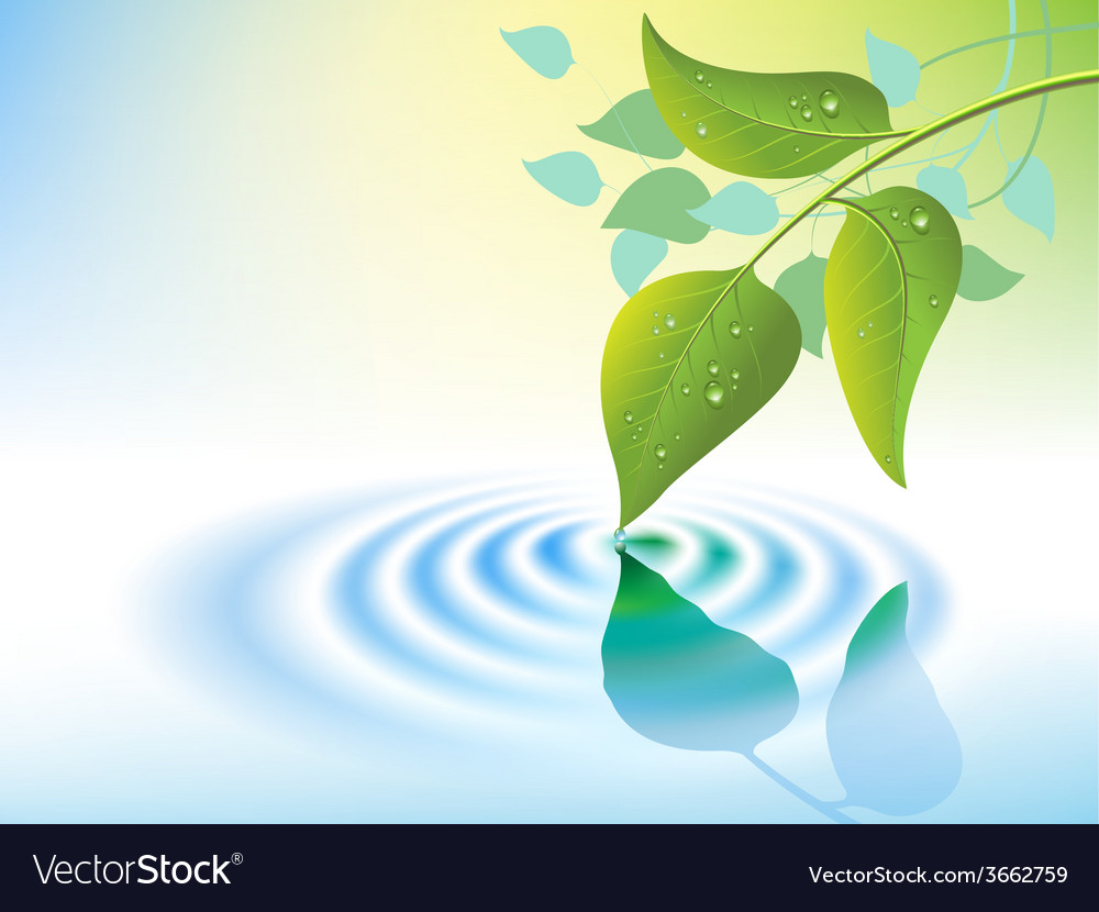 Water ripple and leaf vector