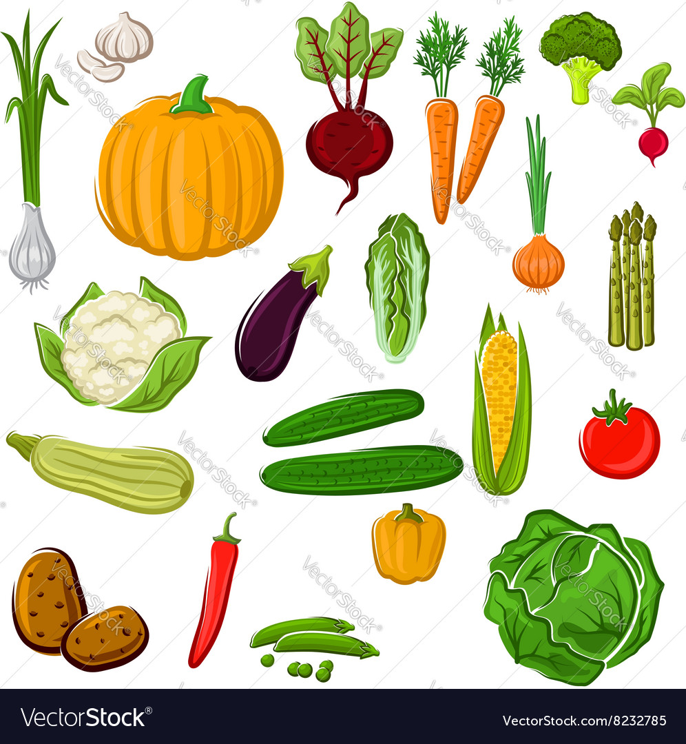 Farm vegetables for agriculture design vector