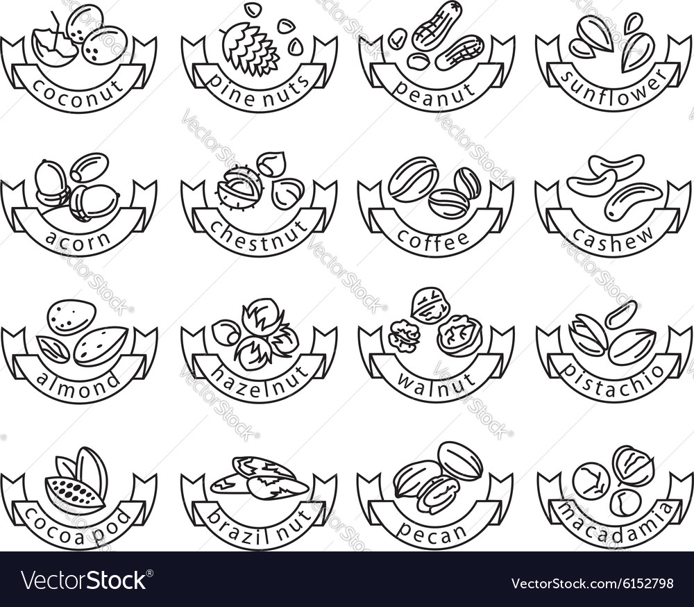 Nut icons vector