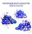 set of watercolor grapes vector image