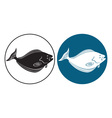 fish halibut vector image vector image