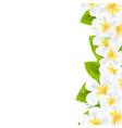 Frangipani Flowers Border vector image
