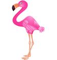 flamingo cartoon vector image