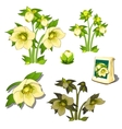 Seeds stages of growth and wilting yellow flowers vector image
