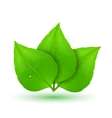Green leaves with drops of water vector image vector image