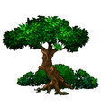 old oak tree with lush green foliage and bushes vector image