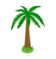 Palm tropical tree icon isometric 3d style vector image