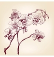 floral orchid hand drawn vector image