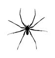 big spider vector image