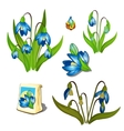 Stages of growth and wilting blue wildflowers vector image