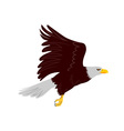 Bald Eagle Flying vector image vector image