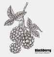 sketchy blackberry branch hand drawn berries vector image