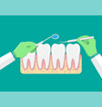 dentist with tools examines teeth vector image