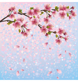 Spring background with sakura blossom cherry tree vector image