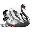 Black Swan vector image