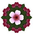 Floral rosette pink cherry flower vector image