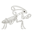 Mantis Coloring for adults vector image