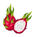 dragon fruit isolated on white background vector image