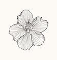 Hibiscus flower top view line pattern Coloring boo vector image