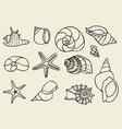 set of vintage seashells vector image