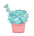 succulent plant in rustic pot isolated ornamental vector image