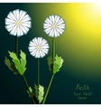 Floral fantasy background Camomiles vector image