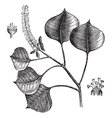 Chinese tallow tree engraving vector image vector image