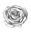 hand draw black and white sketch ornate rose vector image