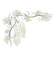 Grape vines vector image