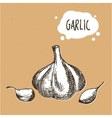 Garlic in engraving vintage style Hand drawn vector image