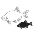 bream fish vector image vector image
