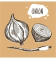 Onion in engraving vintage style Hand drawn onion vector image