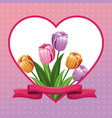 beautiful heart with tulip flowers ribbon vector image