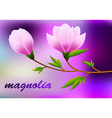 Spring magnolia background with blossom brunch of vector image