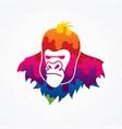 gorilla head king kong face angry big monkey vector image