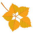 Branch with yellow autumn leaves vector image
