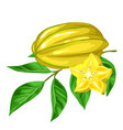 star fruit carambola isolated on white background vector image