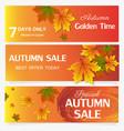 autumn sale banner season leaf card nature vector image