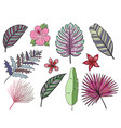 hand drawn tropical leaves color set set vector image