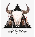 Buffalo skull with feathers vector image