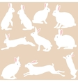 rabbit silhouettes on the white background vector image