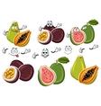Exotic cartoon guava passion fruit papaya fruits vector image