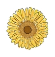 Sunflower sketch for your design vector image