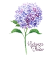 Branch of blue hydrangea vector image