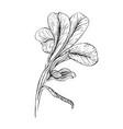 iris flower ink sketch on white background vector image
