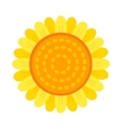 Beautiful sunflower isolated on a white background vector image
