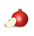 Fresh pomegranate and apple slice vector image